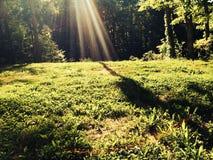 Raia de luz do sol Imagens de Stock