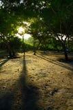 Raia de luz na floresta Fotografia de Stock Royalty Free