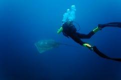 Raia de picada subaquática do mergulhador Imagem de Stock
