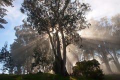 Raias da árvore e do sol Fotografia de Stock Royalty Free