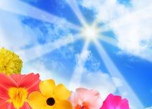 Raias da luz do sol e flores brilhantes Imagem de Stock Royalty Free
