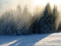Raias da luz solar na floresta do inverno fotografia de stock