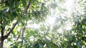 Raias de Sun através das árvores vídeos de arquivo