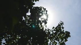 Raias de Sun através das árvores filme