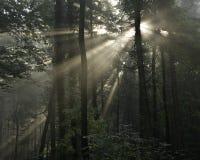 Raias de Sun em uma floresta Imagens de Stock