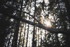 Raias de Sun em uma floresta Foto de Stock Royalty Free
