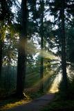Raias de Sun na floresta Fotografia de Stock Royalty Free