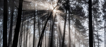 Raias de Sun na floresta Foto de Stock