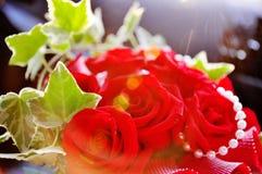 Raias de Sun que brilham em rosas bonitas do vermelho do sangue Imagem de Stock Royalty Free