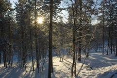 Raias do sol da manhã na floresta imagens de stock