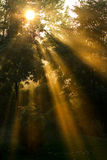 Raias longas do sol Imagens de Stock Royalty Free