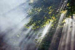 Raias Mystical da luz solar nas árvores Imagens de Stock