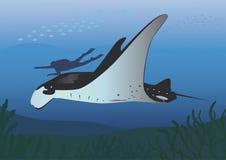 Raie et plongeur de Manta Images stock