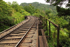 Rail bridge in forest Royalty Free Stock Image