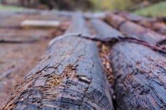 Rail. Nature in Tekeli. Spring. royalty free stock images