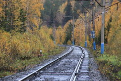 Rail road leading to autumn Royalty Free Stock Photo