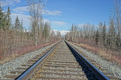 Rail road tracks cutting through the woods Royalty Free Stock Image
