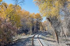 Rail track in populus euphratica forest. In autumn Stock Photos