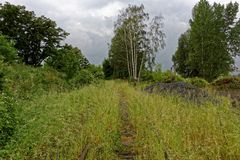 Rail tracks overgrown in green grass Stock Image