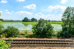 Rail tracks and rice fields, Lomellina (Italy) Royalty Free Stock Photos
