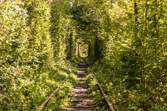 Rail tunnel in the forest. Beautiful tree rail tunnel in forest called The tunnel of love Royalty Free Stock Images