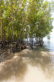 Railay beach in Krabi Thailand mangroves Royalty Free Stock Photos