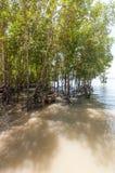 Railay beach in Krabi Thailand mangroves Royalty Free Stock Photos