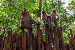 Railay beach in Krabi Thailand monkeys Royalty Free Stock Images
