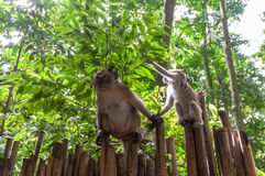 Railay beach in Krabi Thailand monkeys Royalty Free Stock Photos