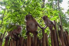 Railay beach in Krabi Thailand monkeys Stock Images