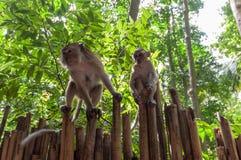Railay beach in Krabi Thailand monkeys Royalty Free Stock Photography