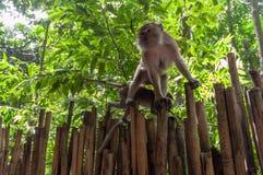 Railay beach in Krabi Thailand monkeys Stock Image