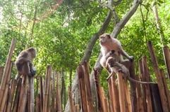 Railay beach in Krabi Thailand monkeys Royalty Free Stock Photo