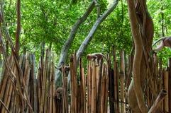 Railay beach in Krabi Thailand monkeys Stock Photos