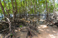 Railay beach in Krabi Thailand panorama Royalty Free Stock Photography