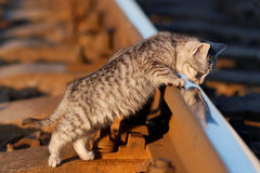 Railcat Foto de Stock Royalty Free