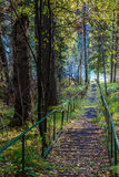 Railed path in Siberian forest Royalty Free Stock Photos