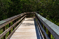 Railed wooden boardwalk in florida. Looking down the length of a wooden boardwalk surrounded by subtropical vegetation on a sunny day in Bonita Springs Florida Stock Photos