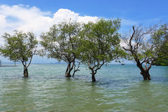Railey, море Krabi Таиланда Стоковая Фотография RF