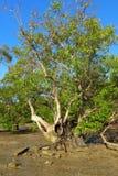 Railey, mare di Krabi Tailandia Fotografie Stock