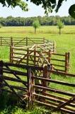 Railing to enclose sheep Royalty Free Stock Photography