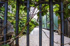 Green vines on railings. The railings outside the building were covered with green vines royalty free stock photo