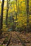 Railraod Spuren durch Herbst-Wald Lizenzfreies Stockfoto