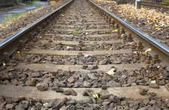 Railroad in autumn Royalty Free Stock Photo