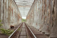 The railroad bridge and the monkey stock photography