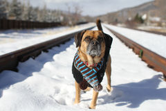 Railroad Dog Royalty Free Stock Photo
