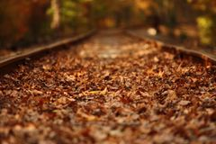 Railroad. Fall trees and leaves on railroad tracks Royalty Free Stock Photos