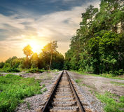 Railroad through the forest Stock Images