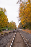 Railroad going into the beautiful yellow autumn Royalty Free Stock Image