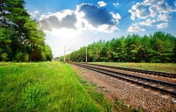 Railroad and pine forest Stock Photos